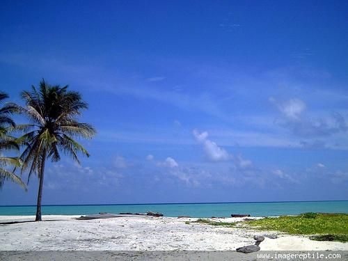 Derawan island, East Kalimantan
