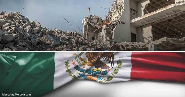 Después de los temblores en México, un equipo de búsqueda y rescate no ha dejado de ayudar a encontrar sobrevivientes atrapados en los escombros. http://mascotas.mercola.com/sitios/mascotas/archivo/2017/10/16/terremotos-en-mexico-y-perros-de-busqueda.aspx
