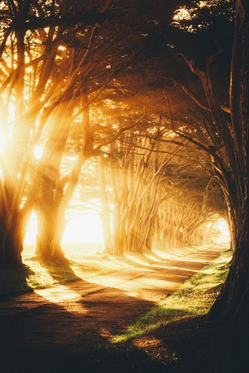 banshy:  Cypress Tree Tunnel by: Jude Allen