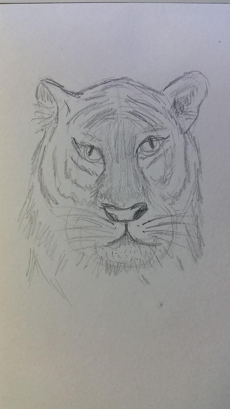 Tiger - latest attempt and getting better 2016-04-24