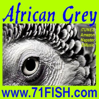 AFRICAN GREY remix by 71 FISH