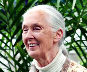 """Jane Goodall is an English Animal Rights activist famously dubbed as """"the woman who redefined man"""". She is an ethologist and anthropologist, ."""