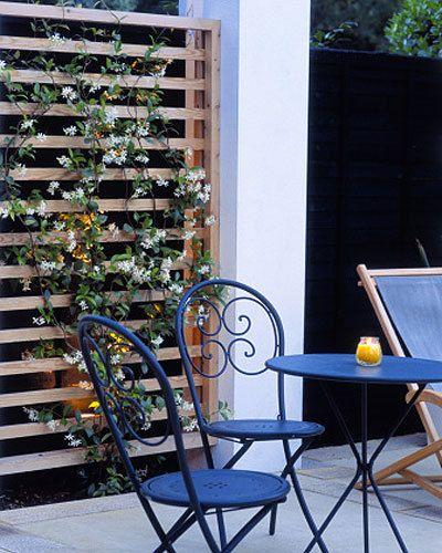 Star Jasmine Great ideas for small gardens Stephanotis