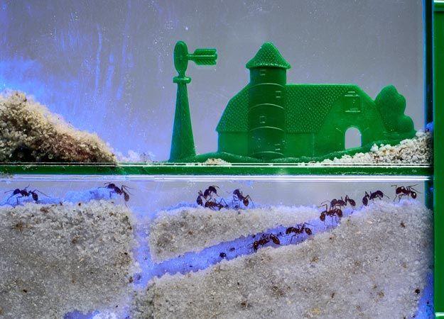 игрушка муравьиная ферма