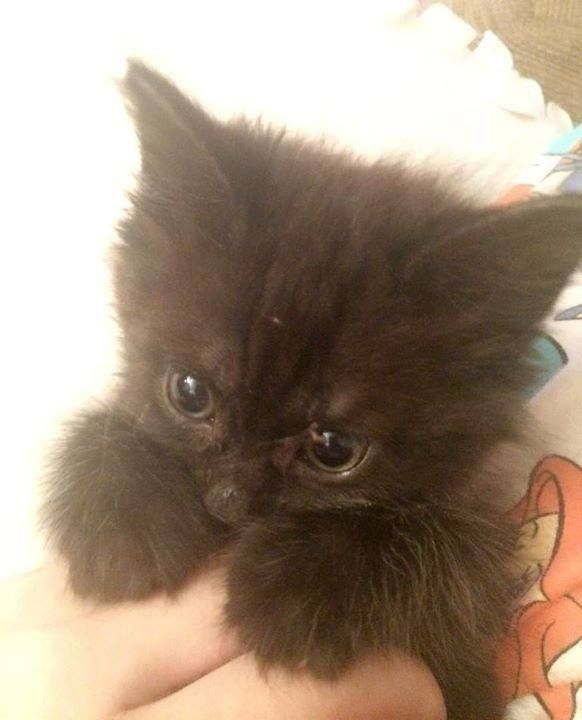 Cute Things for Cats : Photo