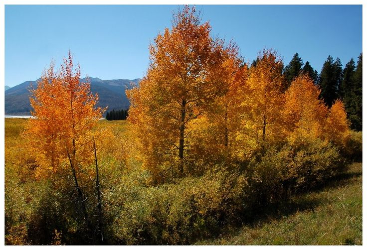 Fall colors in the Grand Tetons - Grand Teton National Park, Wyoming