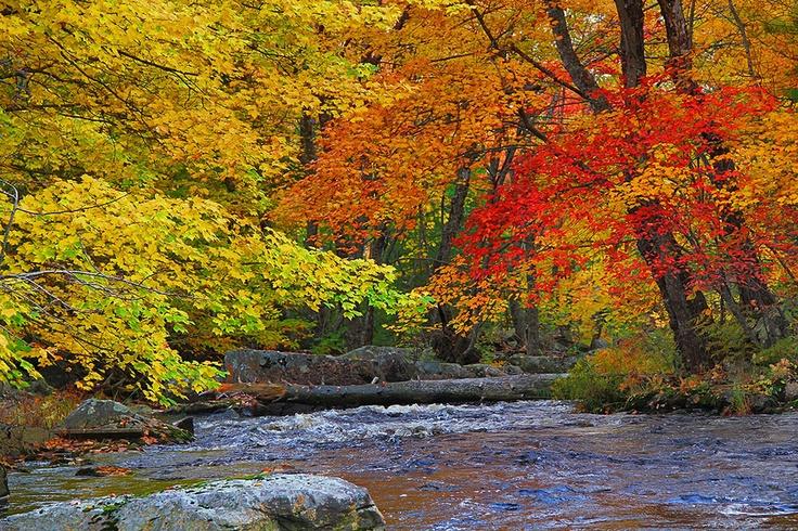 Camerons Brook, Kejimkujik Scenic Drive, near Liverpool, Nova Scotia. The fall colours were amazing along the route this week.