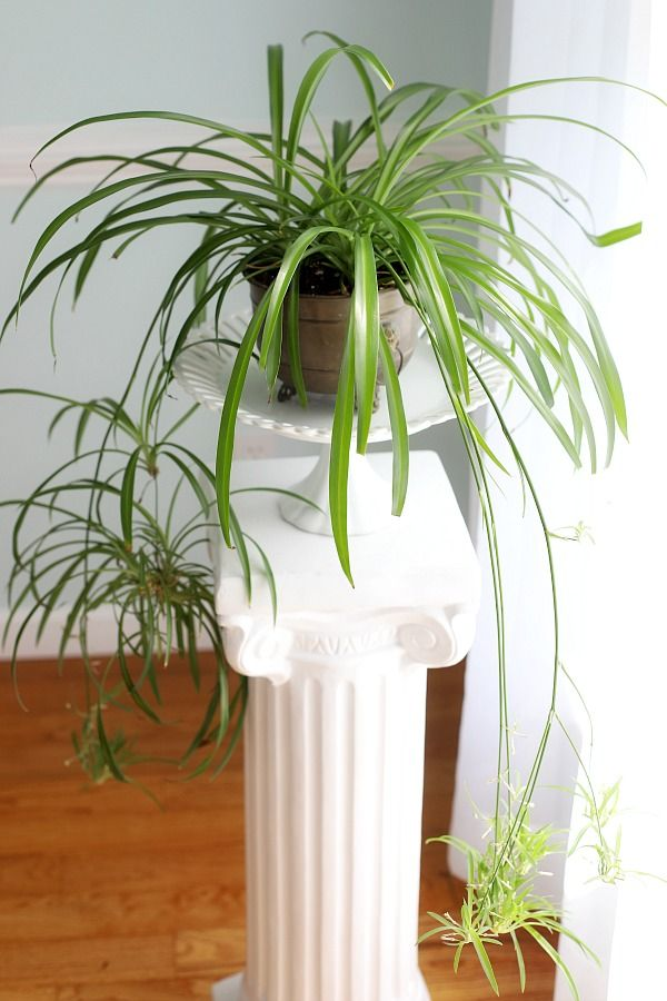Happy Houseplants | GPTHeart Blog | Houseplants, Plants