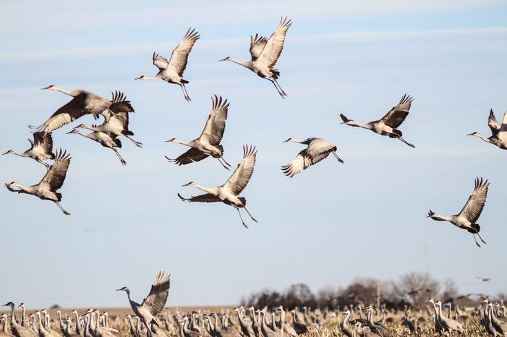 Https Cranetrust Org Explore Crane Migration Tours
