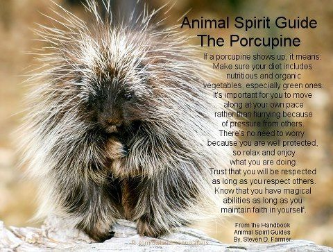 Animal Spirit Guide : The Porcupine