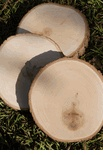 "Wooden craft supplies! Round 7-9"" Basswood Tree Slices $7.99 each / 3 for $7 each"
