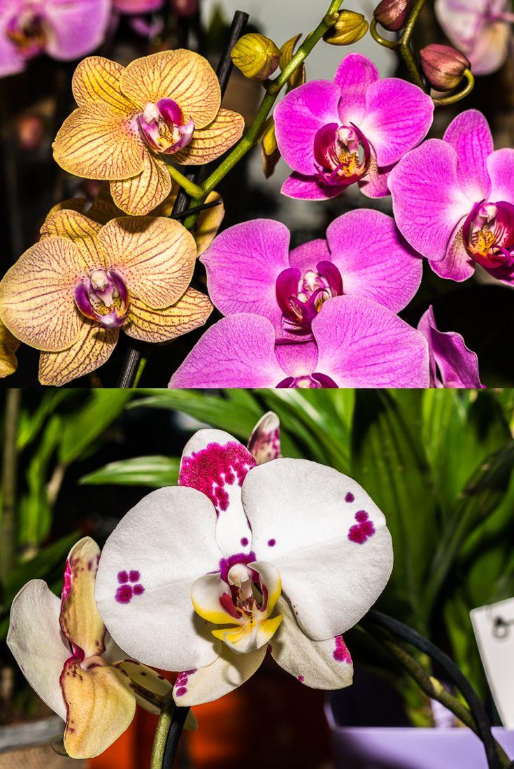 Eleganza, raffinatezza e armonia...il tutto racchiuso in un'orchidea! #fiorito #orchidea #fiori #eleganza #bellezza