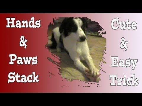Cute dog trick, Cover your hand with a paw... Pam's Dog Academy; Pamela Johnson www.pamsdogtraining.com