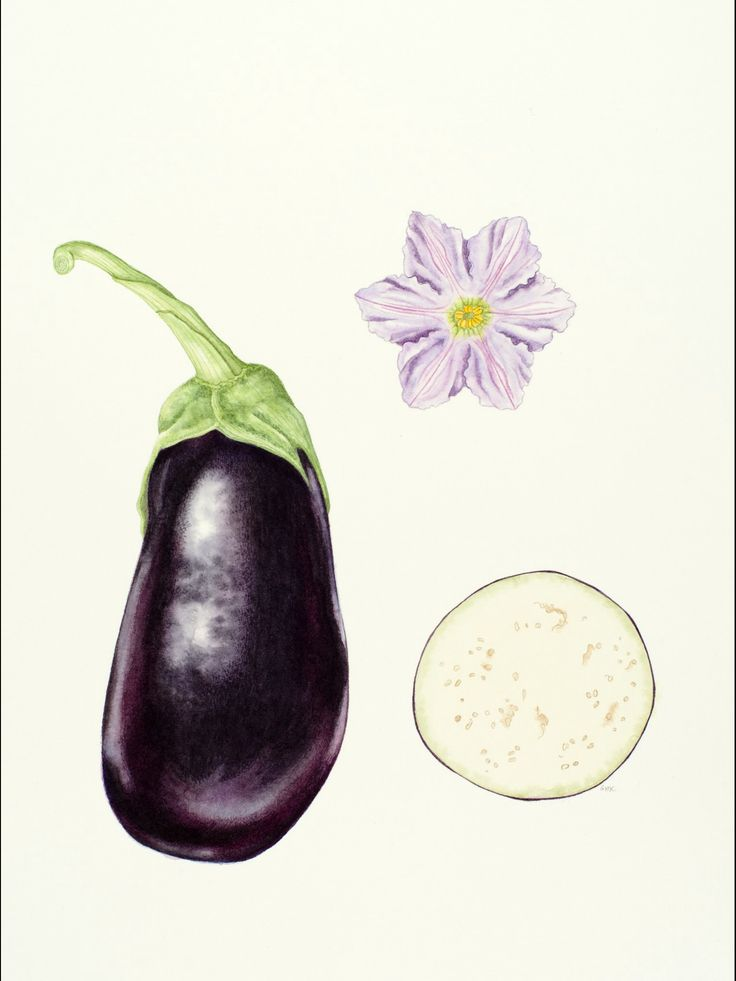 #eggplant watercolor on paper 2016 Geraldine MacKinnon  #botanicalillustration #aubergine #black