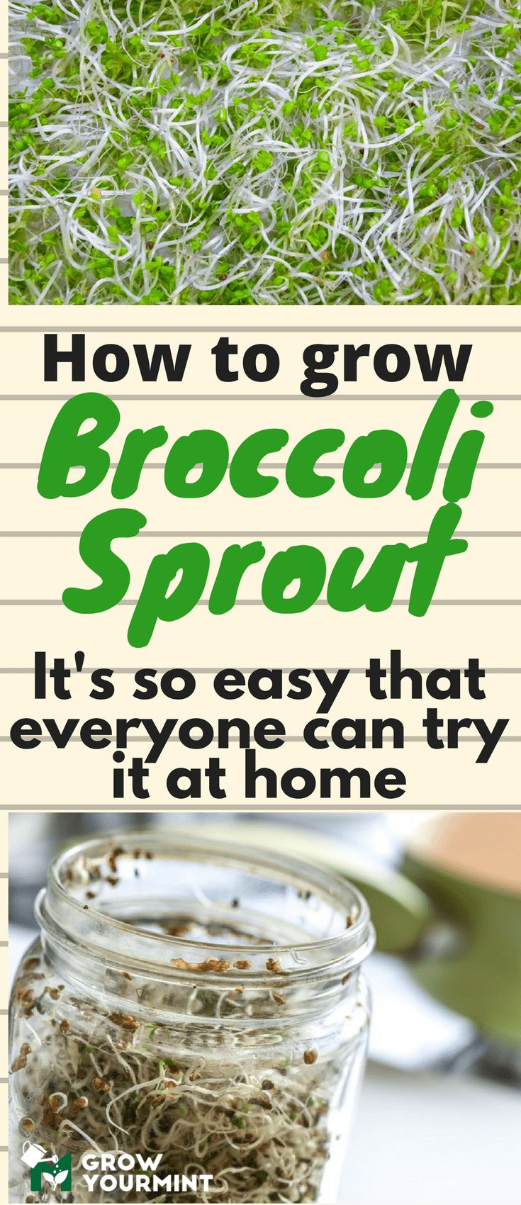How to grow broccoli sprouts #broccolisprout#growyourmint #nutritionprogram,