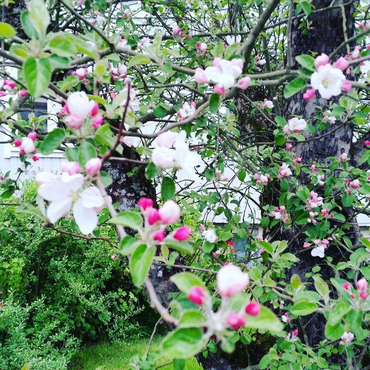 Swedish: Ett Äppelträd 🍎🍏🌳🍎🍏 English: an apple tree