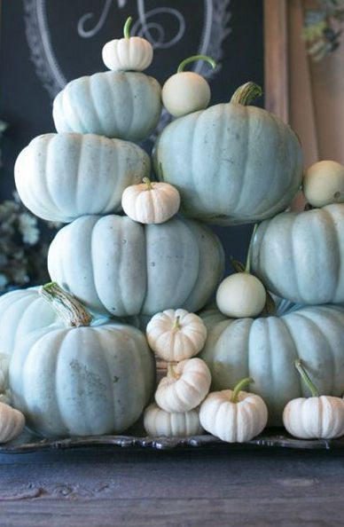 Pale Blue Pumpkins