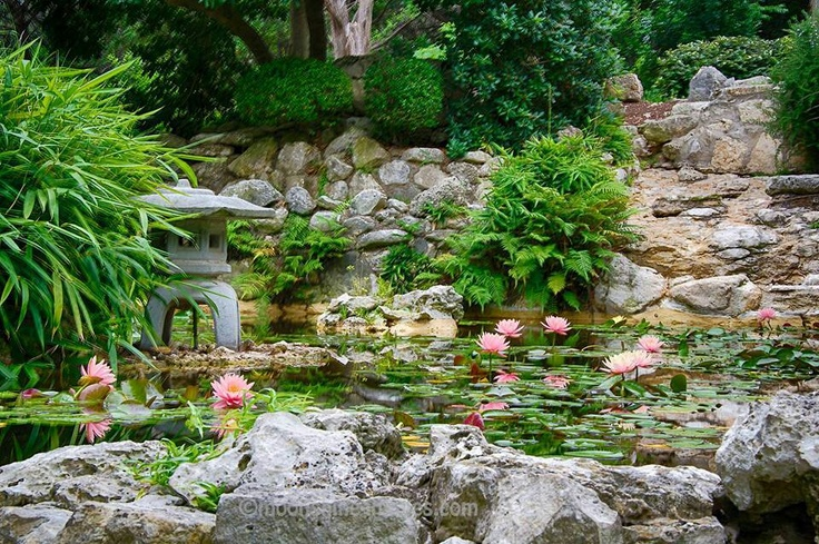 9 best images about land sea gardens on pinterest for Japanese water plants