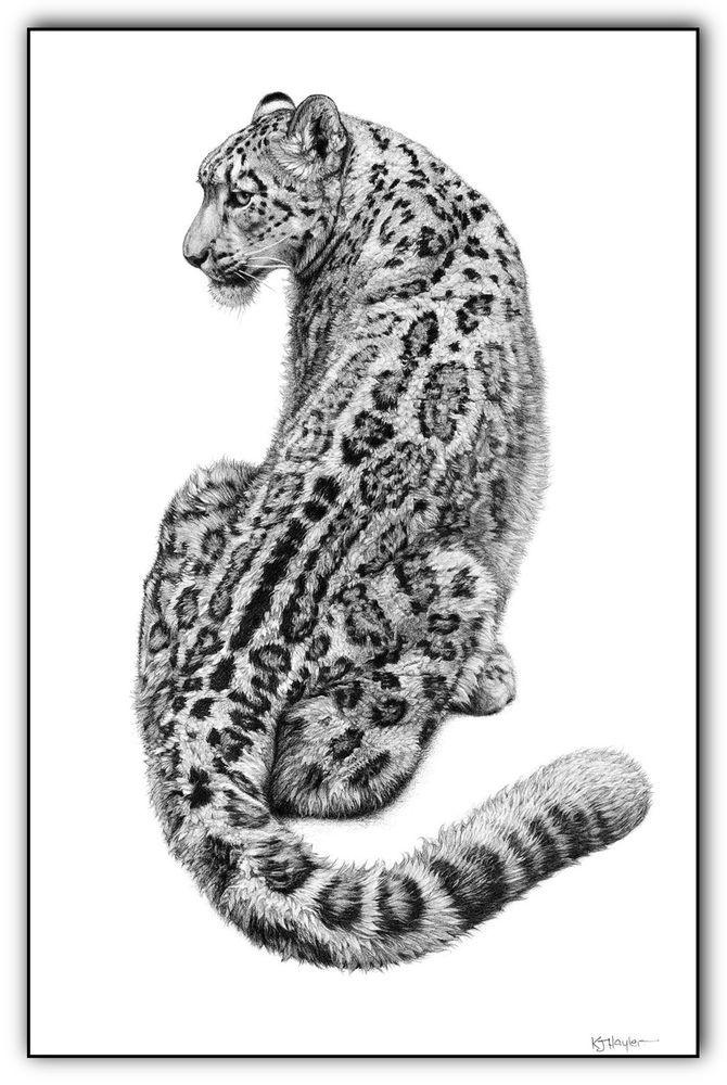 так ценно картинки кошки ягуар графика него стоит