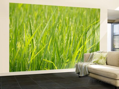 Rice Field, Near Can Tho, Mekong Delta Wall Mural – Large