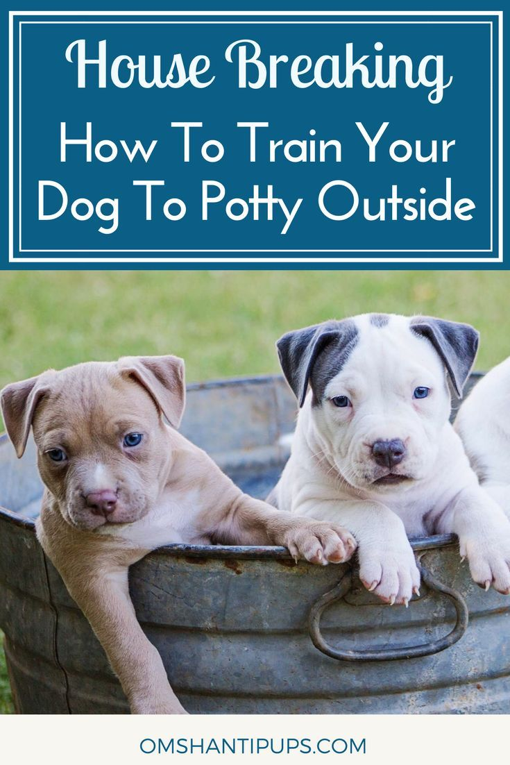 How To House Train Your Dog Training Your Dog Dog Training Dog