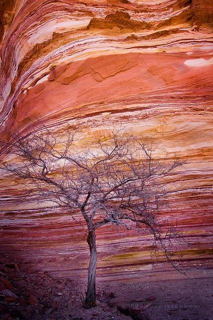sandstone at the Murchison River, Kalbari