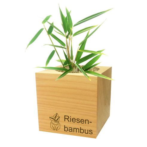 Feel Green Giant Bamboo Ecocube Planter: The Feel Green Giant Bamboo Ecocube is a stylish and eco-friendly way of giving the gift of a tropical plant to a friend or loved one - or even to yourself! Made of high quality alder wood originating from Austria,