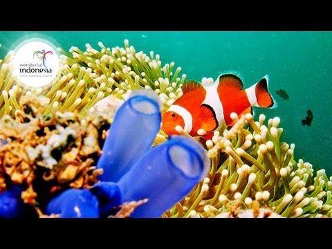 Wonderful Indonesia | Manado - Bunaken National Park | Epic Nesia