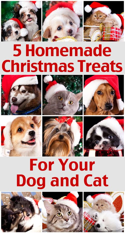 5 Homemade Christmas Treats For Your Dog and Cat with ingredients you already have at home!
