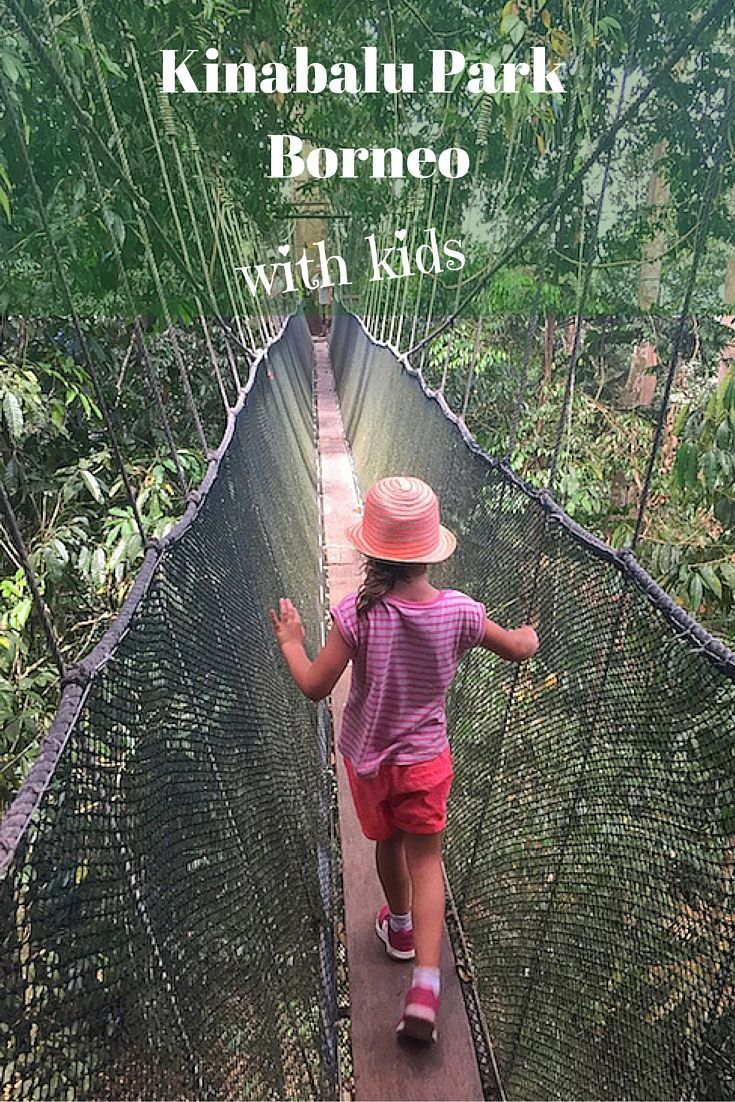 A day trip from Kota Kinabalu to Kinabalu Park with kids. Visiting the Poring hot springs and braving the canopy walkway along the way.