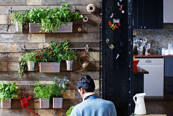 Imagem de uma parede com vasos e outros recipientes pendurados com plantas. Cozinha como pano de fundo.