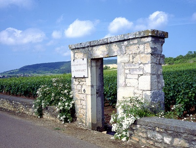 Le Montrachet vineyard, Burgundy