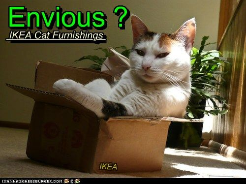 9cae54627e18dc84dd38b035527e1f3c--funny-cat-humor-cats-humor.jpg