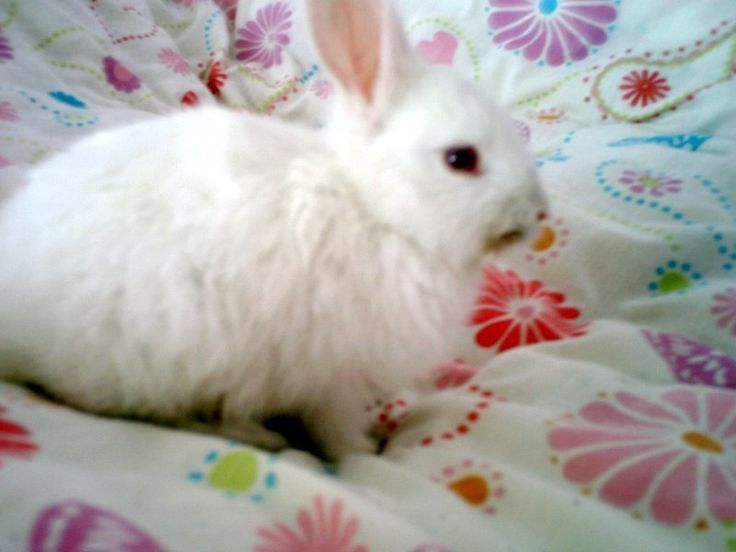 BUNNY RABBITS - Google Search | HERE COMES PETER COTTON ...