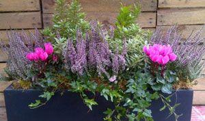 fenetre-fleurie-hiver-champetre