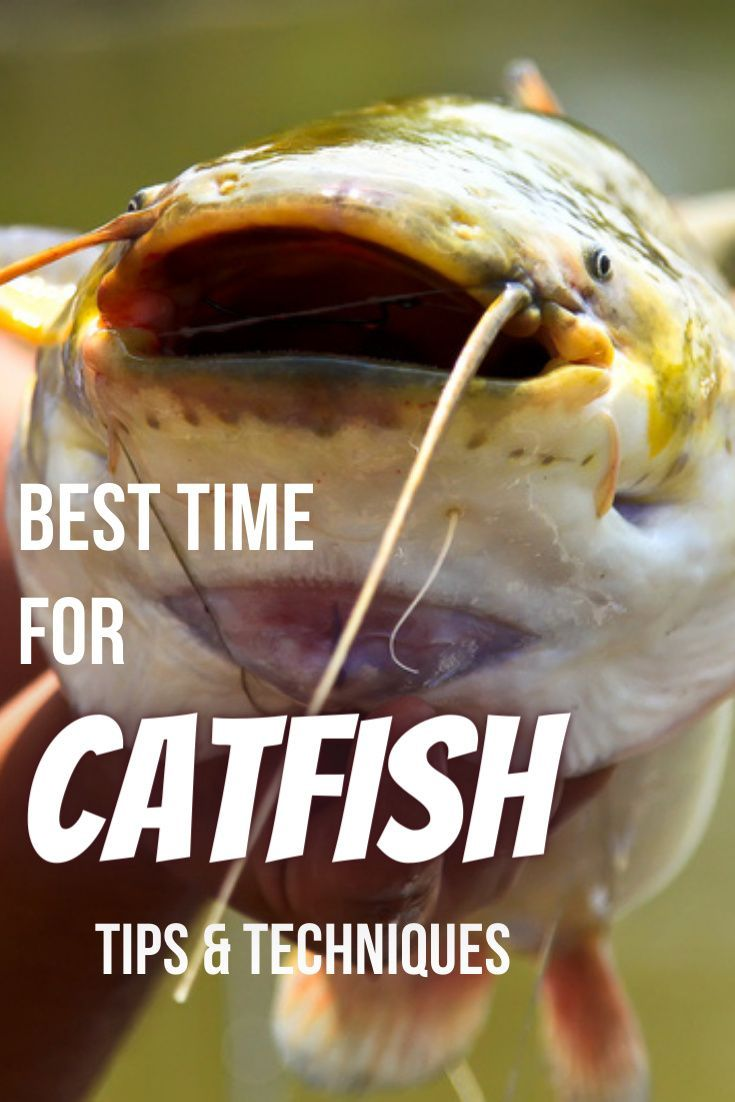 The Best Time Of Day To Catch Catfish Tips And Techniques Fishing Skillz How To Catch Catfish Catfish Fishing Catfish