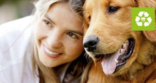 La importancia de esterilizar a las mascotas   Fundación UNAM