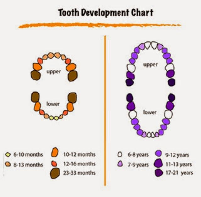 The  Best Teeth Eruption Chart Ideas On   Baby