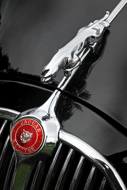 UK Oxon Blenheim Car Show Jaguar Detail   Car photo