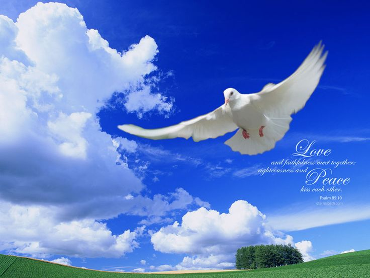 Love Dove Beautiful Wallpaper : bible+guotes+with+doves+ Free christian Wallpapers Doves make me happy Pinterest ...