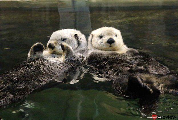 神戸の人気水族館「神戸市立須磨海浜水族園」は、1957年開園の歴史ある水族館です。元は「須磨水族館」としてオープンしましたが後に「神戸市立須磨海浜水族園」へとリニューアルされました。現在では「スマスイ」の愛称で神戸の人々から親しまれている水族館です。園内はそれぞれ海の生き物に合わせた独立した展示館があり、ありのままに暮らす海の生き物たちと出会えます。