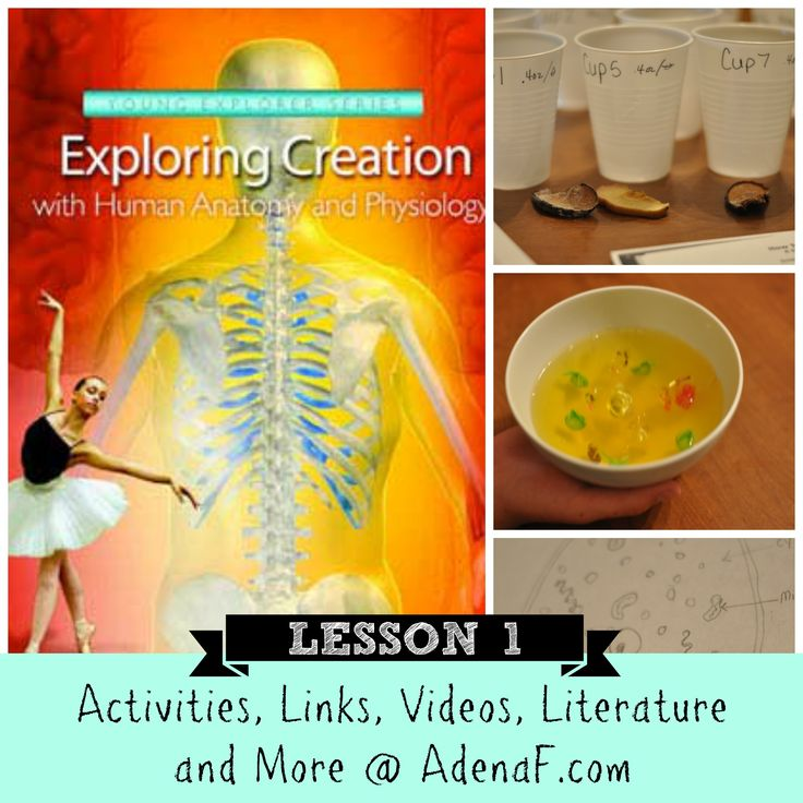 Apologia Human Body lesson 1 #homeschool #science