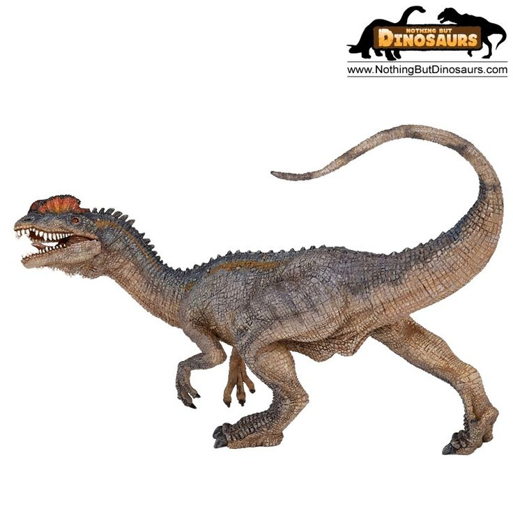 Natural History Museum Dinosaur Figures