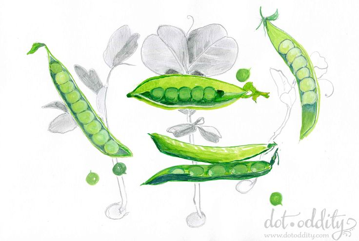 Green Peas by Maria Larsson