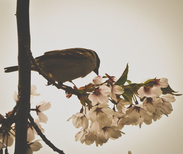 Photo Bird on blossom by Megan Mulder on 500px