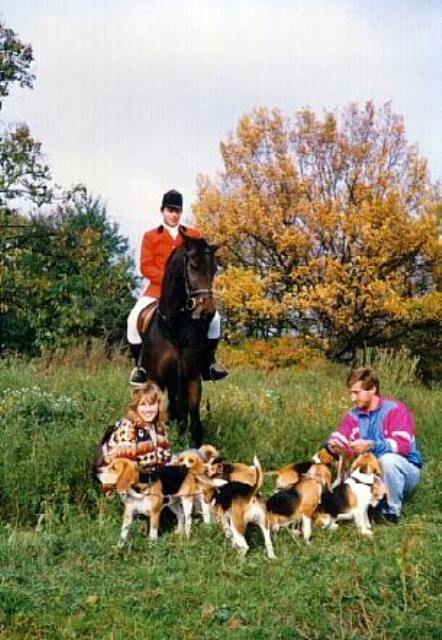 beagle - jack russel terier - puppie´s - stud dog - for sale - weinlinie - z atarova dvora