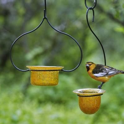 attract baltimore orioles to your yard the glass dish lifts out for