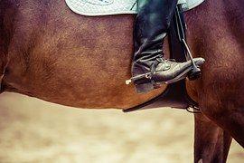 Reiter, Paard, Springsport