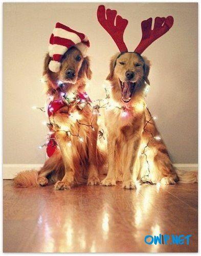 #xmas #christmas