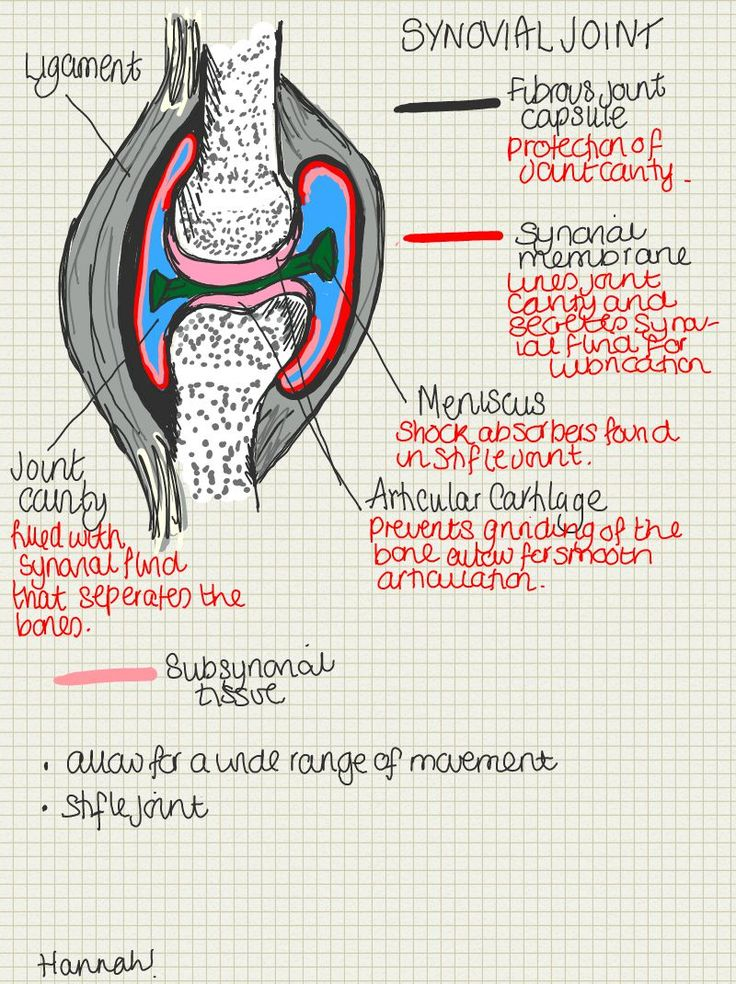 A place to find hints, tips and ask questions. : Basic Synovial Joint Structure…  The stifle joint...